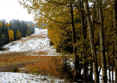 Snowy Hillside and Fall Leaves