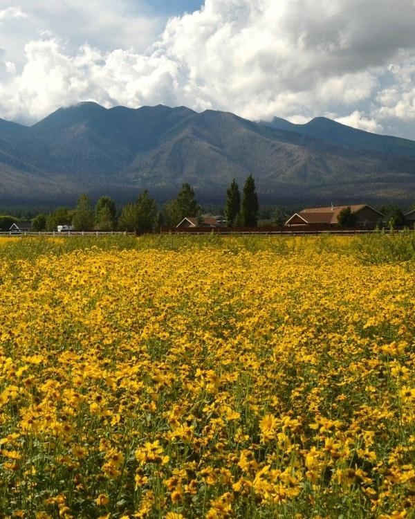 About Peaks Flower Field