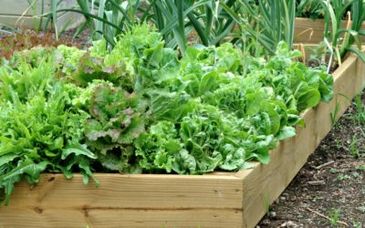 Gardening in Flagstaff