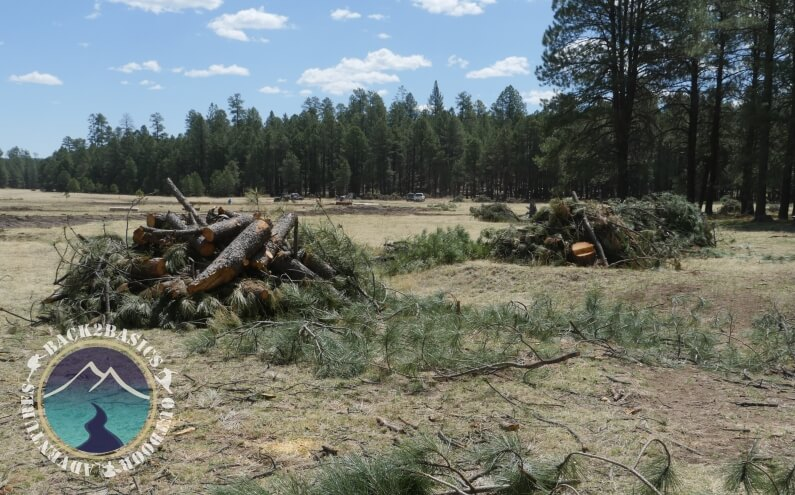 Long Valley Meadow Project Woodpiles