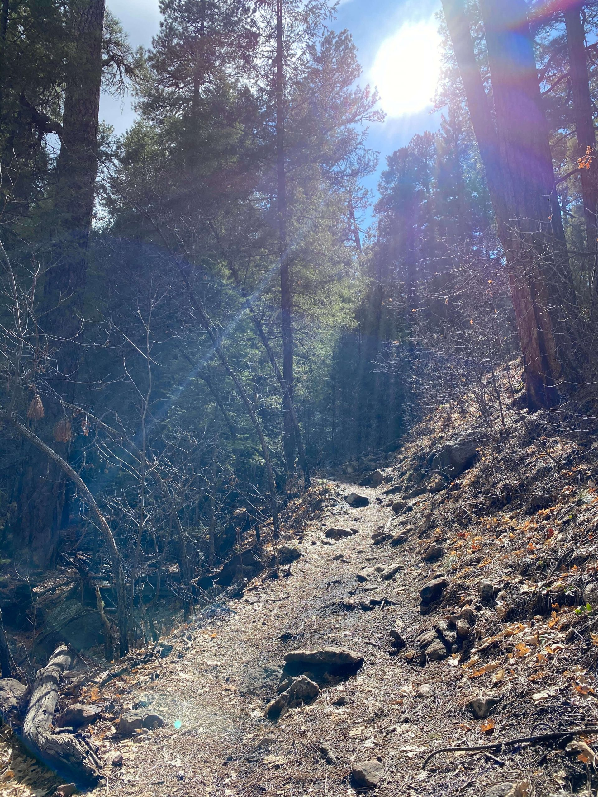 Sun Shining on Hiking Trail